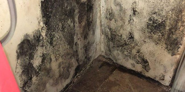 Black Mold Remediation Utah